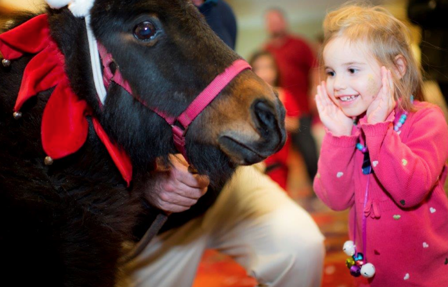 Miniature horses, a fan favorite, bring smiles to patients and families at the Winter Festival.